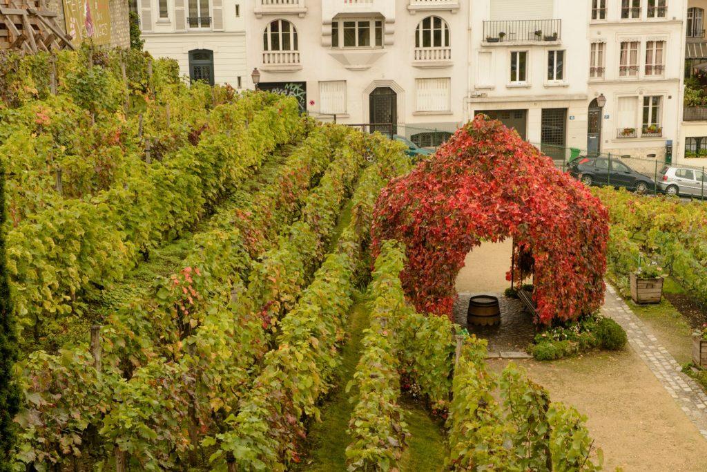 Vigne du Clos Montmartre - dégustation vin de Montmartre pendant la Fête des Vendanges aux Ambassades - Bar restaurant terrasse Butte Montmartre
